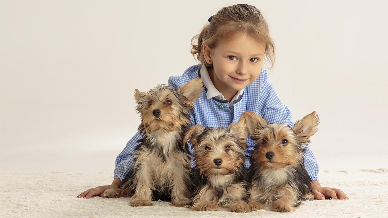 Niña con perros